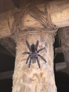 unsere Lieblingspinne