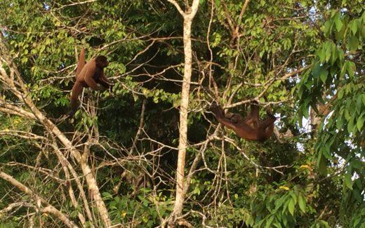 Affen auf einem unserer täglichen Ausflüge